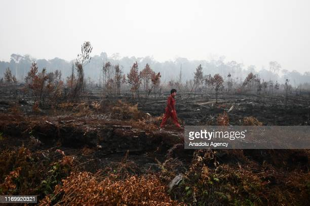 A man walks through a burned forest in Palangkaraya Central Kalimantan Indonesia on September 21 2019 National Agency for Disaster Countermeasure...