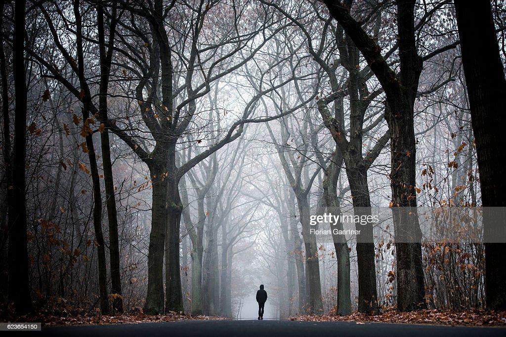 A man walks through a forest at a foggy morning on November 13, 2016 in Jaenkendorf, Deutschland.