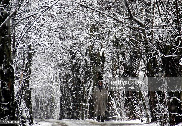 A man walks through a snow covered road and trees on the outskirts of on March 10 2014 in Srinagar India Kashmir Valley including Srinagar city...