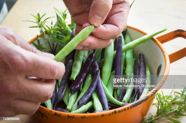 A man washing freshly harvested garden beans in an enamel sieve