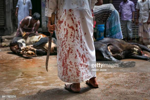A man watches as cows are slaughtered on September 2 2017 in Dhaka Bangladesh Muslims worldwide celebrate Eid AlAdha to commemorate the Prophet...