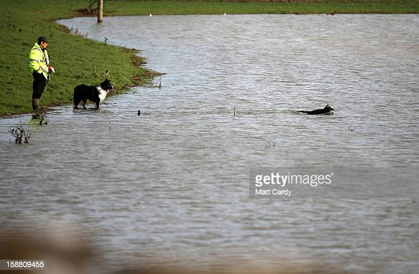 A man watches as his dogs swims in flood waters surrounding the village of Muchelney which has been cut off by flooding on the Somerset Levels on...
