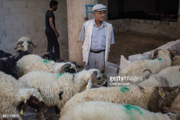 A man watches on as sacrificial sheep are unloaded at an animal market during celebrations to mark the EidalAdha feast on August 31 2017 in Gaziantep...