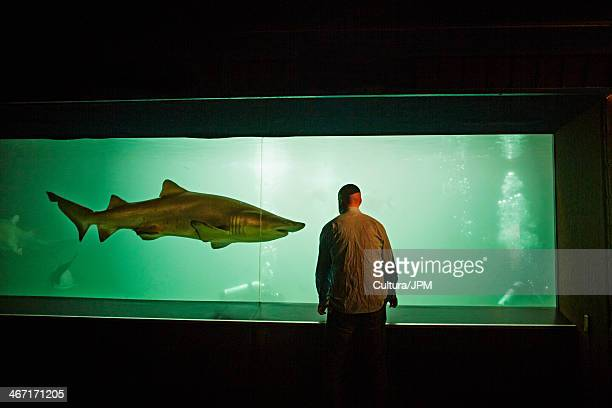 Man watching shark in aquarium