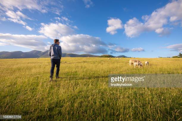 Man watching sheep graze on the lush hills of Keswick, England