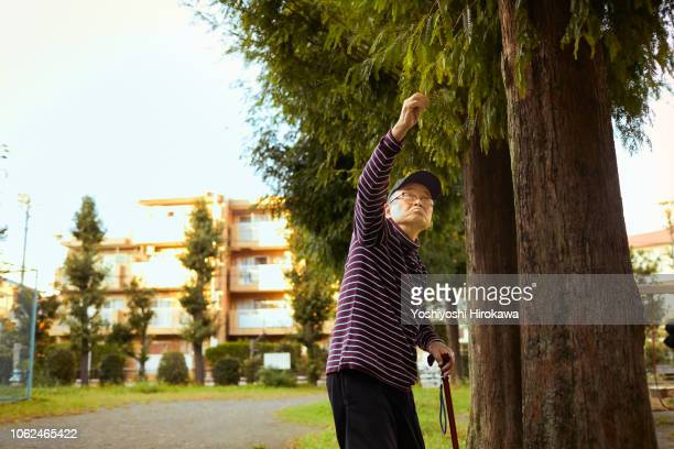 Man watching tree with stick