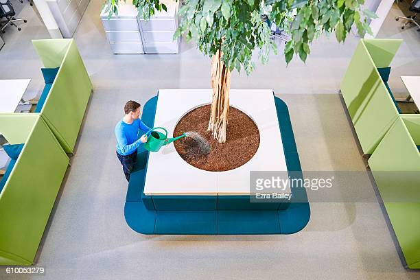 Man watering a giant office plant.