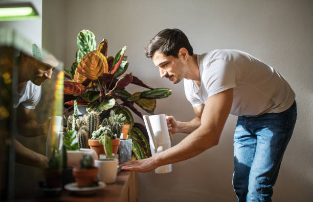 man watering cacti plants in his living room - watering the plants stock pictures, royalty-free photos & images