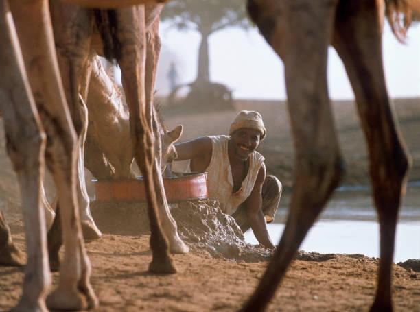 Man watering Camels, Sudan