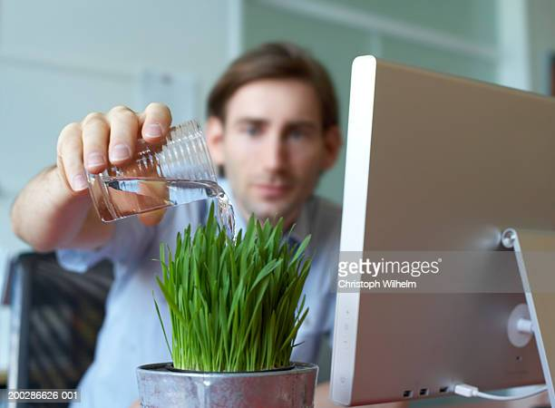 Man watering plant in office (focus on foreground)