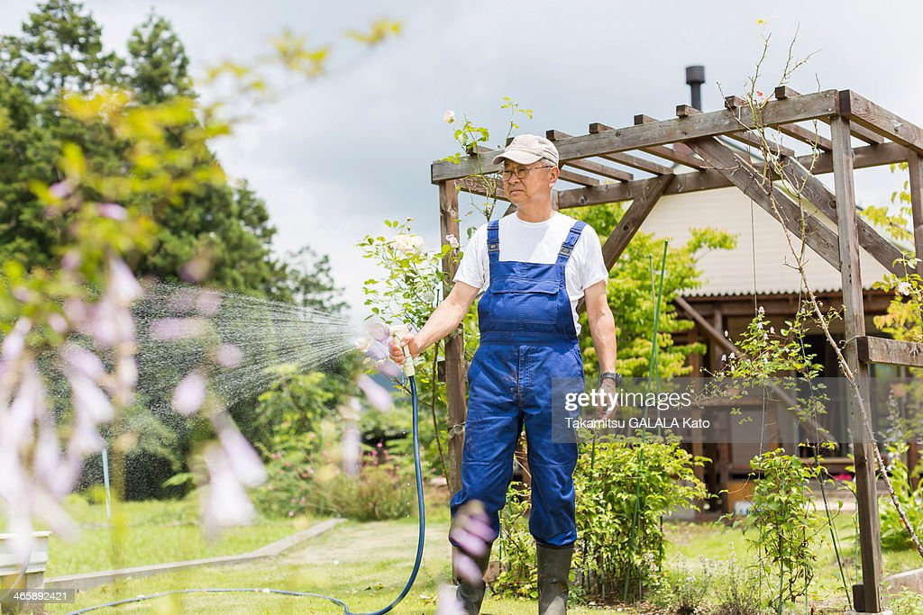 Man watering plants : ストックフォト