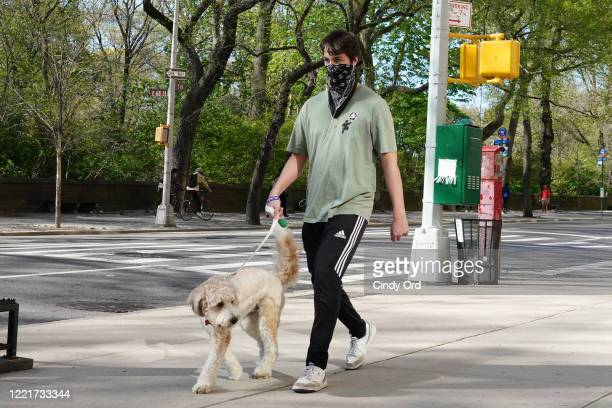 Man wearing a bandana as a face covering walks a dog during the coronavirus pandemic on April 28, 2020 in New York City. COVID-19 has spread to most...