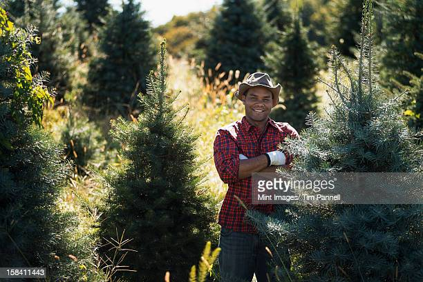 a man wearing a checked shirt and large brimmed hat in a plantation of organic christmas trees. - tree farm stock pictures, royalty-free photos & images