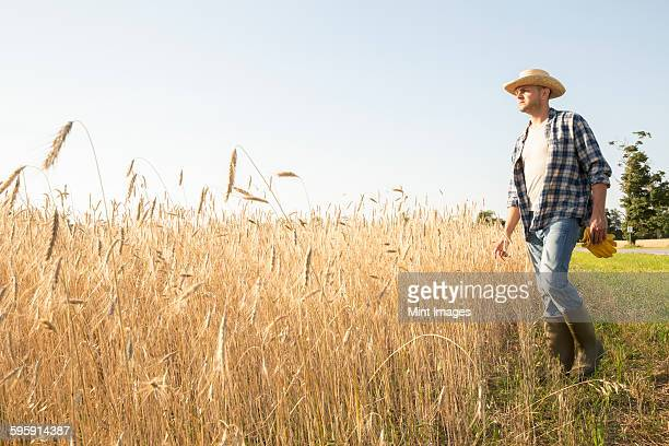 Man wearing a checkered shirt and a hat standing in a cornfield, a farmer.
