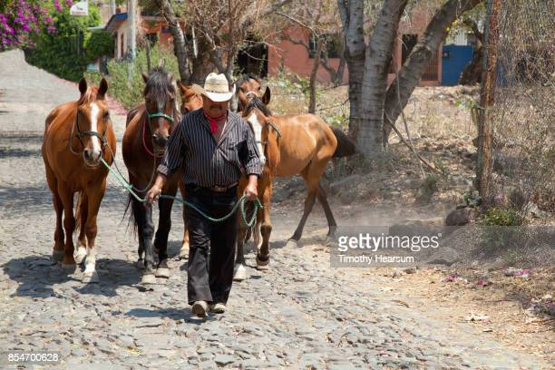 man wearing a cowboy hat and neckerchief leads 5 horses down a cobblestone street - timothy hearsum stockfoto's en -beelden