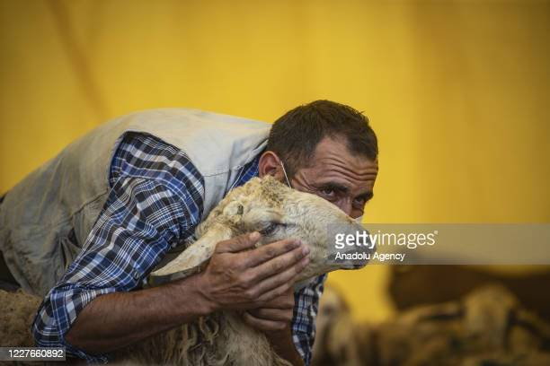 A man wearing a face mask as a preacution against coronavirus pandemic poses for a photo with a sacrificial lamb at a livestock market ahead of the...