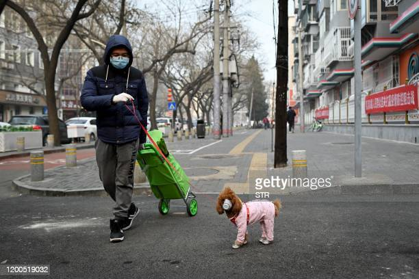 A man wearing a face mask walks his dog as he pulls a trolley after shopping in Beijing on February 13 2020 The number of deaths and new cases from...