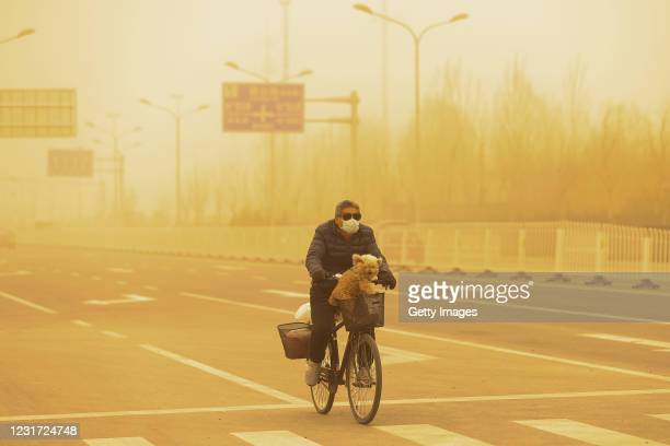 Man wearing a protective mask cycles with his dog in a sandstorm on March 15, 2021 in Beijing, China. The Chinese capital and the northern parts of...