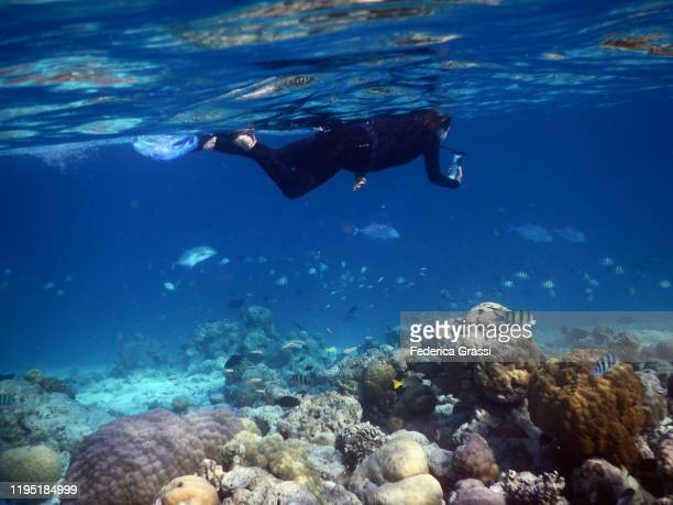 man wearing black wetsuit taking underwater photos, fihalhohi island, maldives - underwater film camera stock pictures, royalty-free photos & images