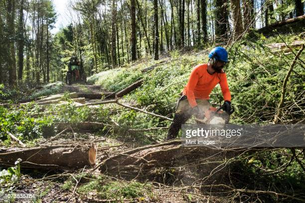 man wearing bright orange top clearing part of forest. cutting tree trunk with chain saw. - cutting stock pictures, royalty-free photos & images