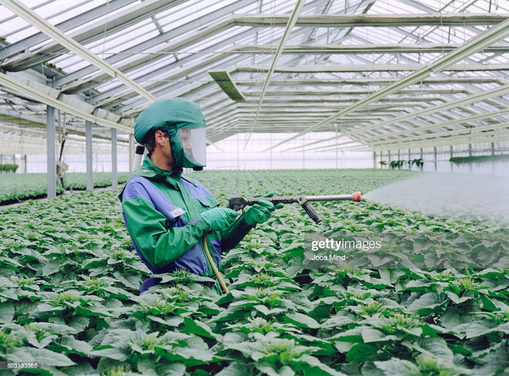 Man Wearing Clean Suit in Greenhouse Spraying with Pesticide : Stock Photo