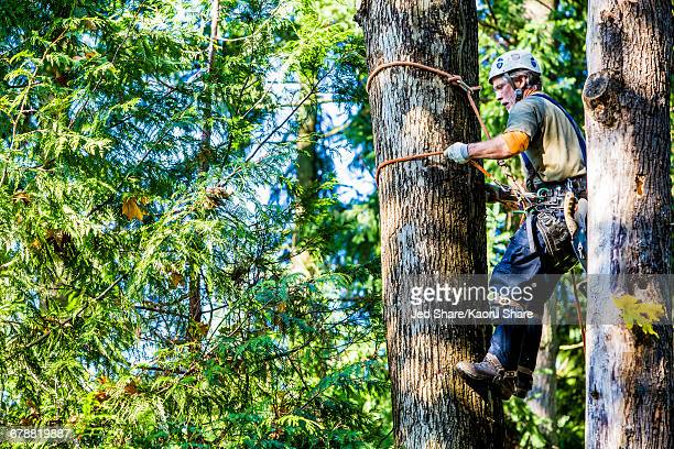 Man wearing harness climbing tree