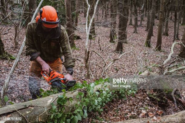 man wearing safety gear using chainsaw to fell tree in a forest. - cutting stock pictures, royalty-free photos & images
