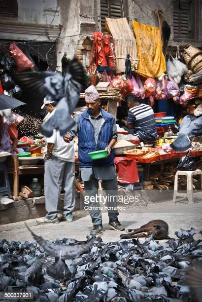 CONTENT] Man wearing the traditional hat and feeding pigeons in a busy commercial street in the heart of Kathmandú Kathmandu is the capital and...