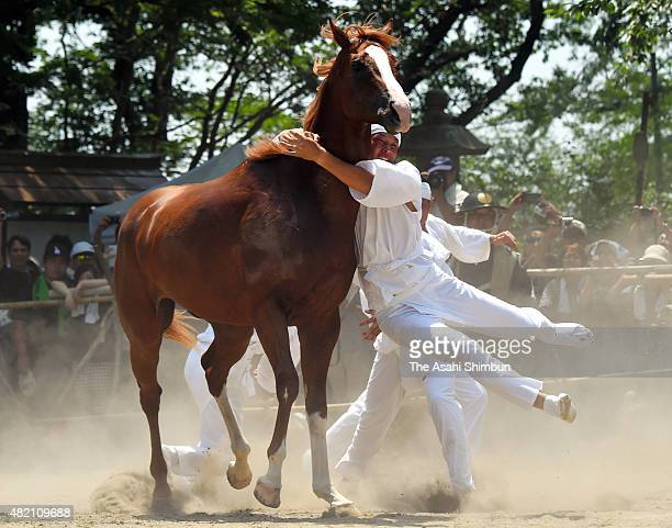 Man wearing white clothes called 'Okobito' tries to capture a bareback horse with bare hands during the 'Nomakake ' ritual to dedicate horses to the...