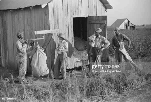 Man Weighing Cotton, Farm Security Administration Project, Sunflower Plantation, Merigold, Mississippi, USA, Marion Post Wolcott for Farm Security...