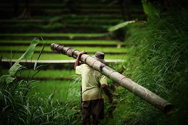 Man with a bamboo pole
