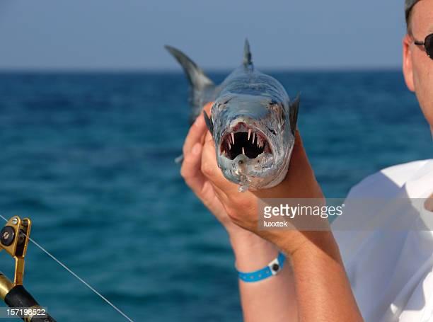 uomo con un barracuda - barracuda foto e immagini stock