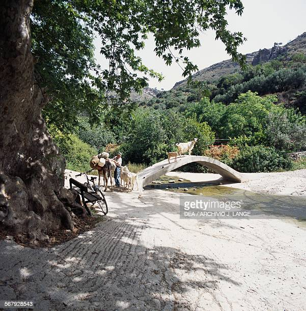 Man with a donkey and goats crossing a bridge, Kalamafka spring, Crete, Greece.