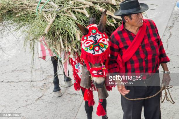 man with a donkey during the celebration of the palm sunday of easter at ayacucho city, peru. - palm sunday stock pictures, royalty-free photos & images