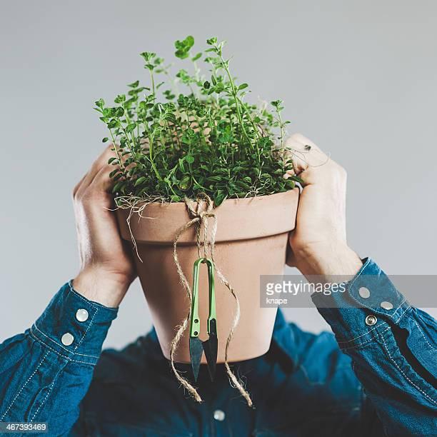 Man with a fresh plant of oregano