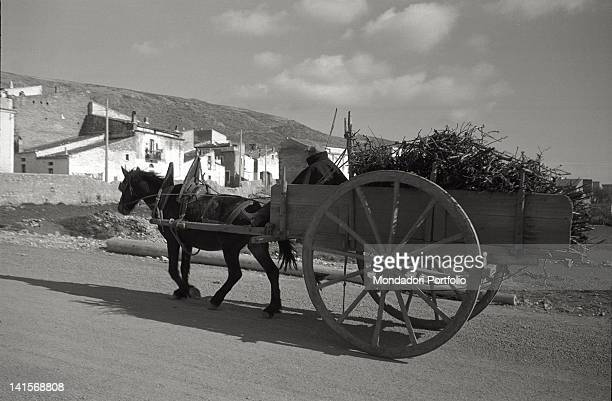 Man with a horse and cart transports a load of sticks along a steep road in San Giovanni Rotondo Italy