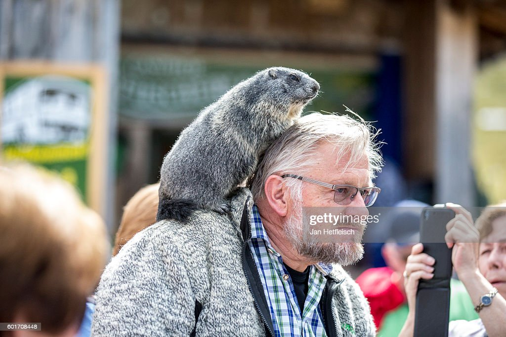 A man with a marmot on his shoulder is seen on September 08, near Zell am See, Austria. The Grossglockner high alpine road is the highest mountain pass road in Austria. It connects Bruck in the state of Salzburg with Heiligenblut in Carinthia. The road is named after the Grossglockner, Austria's highest mountain (3798 m). The road was build from 1930 to 1935. Humans have been crossing the Alps on a path that mainly follows the modern road for more than 3500 years. Celts, Romans, sumpters, gold diggers and galley slaves got past this strenuous and dangerous path.