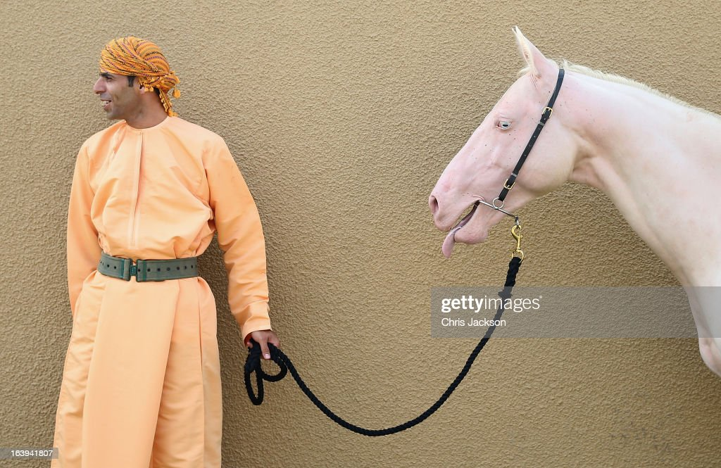 A man with a pink horse ahead of it's appearance in a cavalry event in honour of the Prince of Wales and Duchess of Cornwall's visit, on the eighth day of their tour of the Middle East on March 18, 2013 in Muscat, Oman. The Royal couple are on the fourth and final leg of a tour of the Middle East taking in Jordan, Qatar, Saudia Arabia and Oman.
