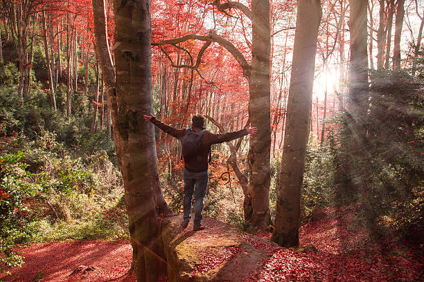 Man with arms raised on the stunning autumn beech.