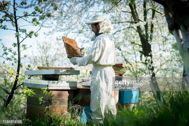 man with bees - 養蜂 ストックフォトと画像