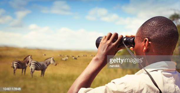 hombre con prismáticos observando animales salvajes - ruanda fotografías e imágenes de stock
