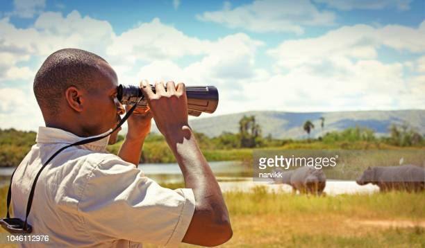 man with binoculars watching wild animals - national park stock photos and pictures