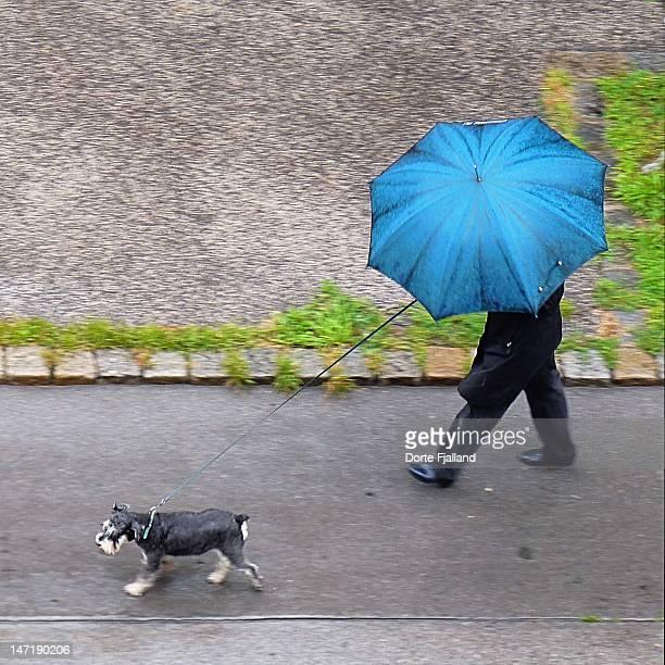 Man with blue umbrella walking dog