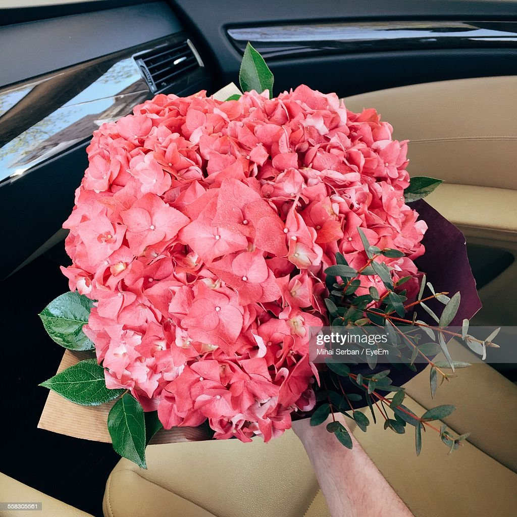 Man with bouquet of pink flowers in car stock photo getty images man with bouquet of pink flowers in car izmirmasajfo Image collections