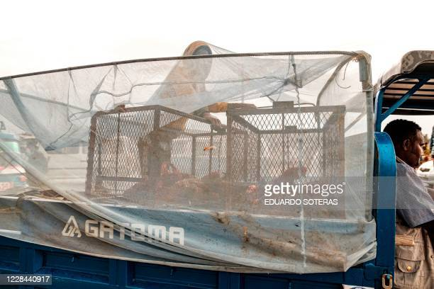 Man with chickens is pictured under a net in the back of a tuk-tuk in a market during the preparations for the eve of the Ethiopian New Year, in the...