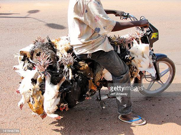 man with chickens tied to motorbike - ワガドゥグ ストックフォトと画像