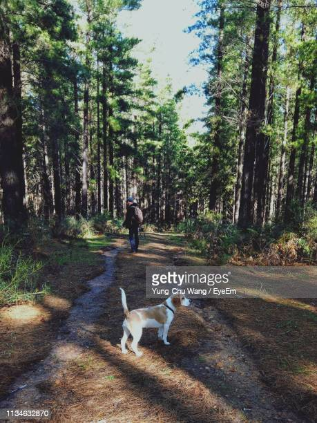 Man With Dog Walking In Forest