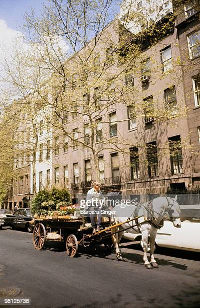 Man with flowers in horse carriage
