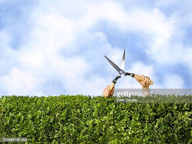 Man with garden shears by box hedge, hidden behind hedge