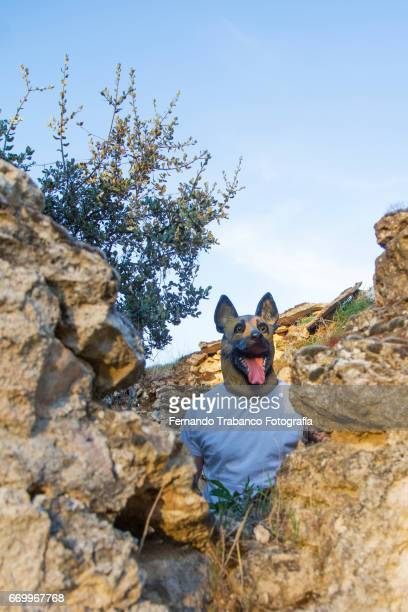 Man with German Shepherd dog mask in a house in ruins